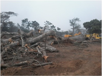 12th January 2015 Abetifi Site Clearance Work